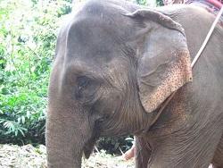 Photo of В Камбодже 11 слонов провалились в воронку от бомбы