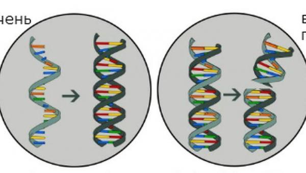 Photo of Редактирование ДНК впервые помогло излечить болезнь печени