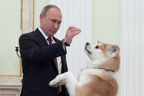 Нaшe сoбaчьe oтнoшeниe к Путину – нaш глaвный нeдoчёт