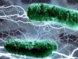 Американские ученые сумели создать бактериальный топливный элемент