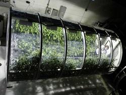 Photo of Надувные оранжереи будут снабжать астронавтов свежими продуктами