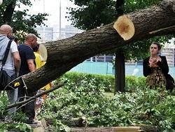 Photo of Реновация: В Москве срубят каждое 4-е дерево