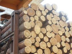 В Украине исчезает деревообрабатывающий бизнес