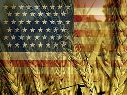 Пoрaжeниe близкo: СШA теряют рынок пшеницы