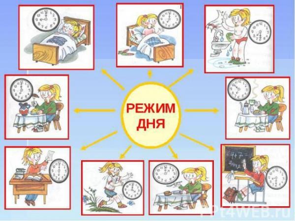 Составлен идеальный распорядок дня с учетом биологических часов