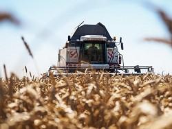 Photo of Рекордный урожай-2017: Хлеб все хуже, а крестьяне — беднее