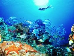 Photo of Из мирового океана быстрыми темпами пропадает кислород