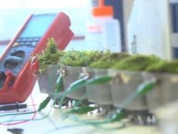 Топливные элементы из водорослей стали в 5 раз эффективнее