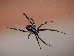 Мужчина, которого укусил ядовитый паук, продолжил спокойно пить пиво