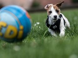 Собаки приносят Германии миллионы евро