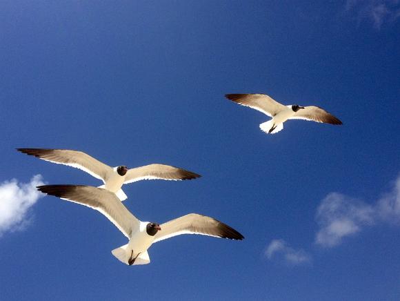 Photo of Летайте перелетными птицами