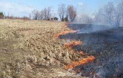 Пальмовое масло и заброшенные поля: почему пылает Российская Федерация?