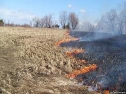 Пальмовое масло и заброшенные поля: почему горит Россия?
