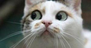 10 лучших мемов кошек