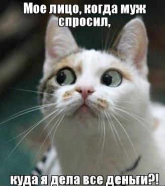 Photo of 10 лучших мемов кошек — фото