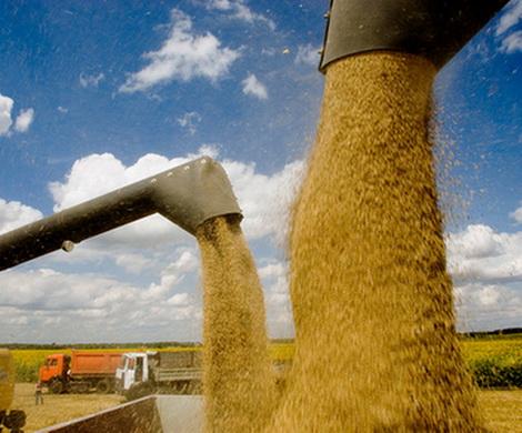 Российская пшеница - новый повод для санкций?