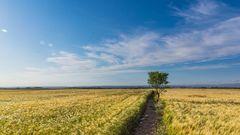 Рост аграрного сектора оказался статистической припиской