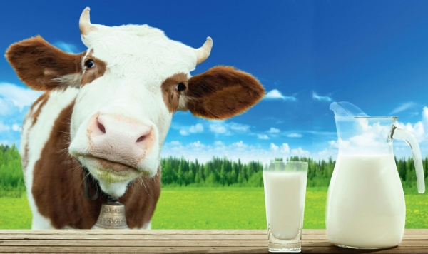 10 продуктов с большим количеством кальция, чем в молоке