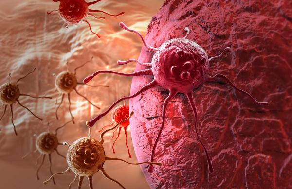 Photo of Лекарство от рака? Израильские ученые через год обещают предоставить полное лечение