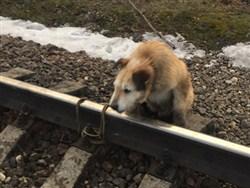 Россиянин привязал собаку к рельсам0