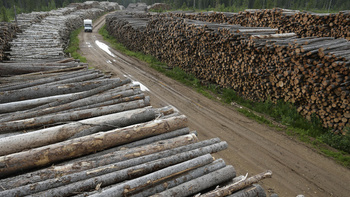 Была тайга, стала тундра: архангельские леса вырубают с невиданной скоростью0