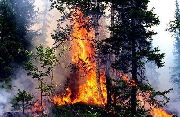 Площадь лесных пожаров в РФ за сутки выросла на 8 тыс. гектаров0