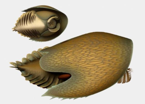 Photo of Родственник «необычной креветки», похожий на корабль Хана Соло