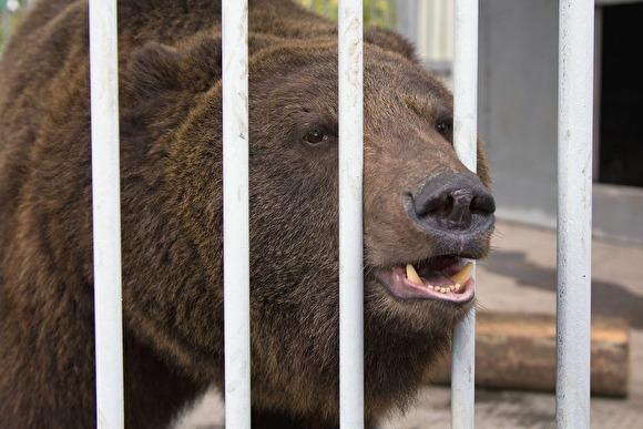 Photo of В Якутии медведь растерзал экс-депутата