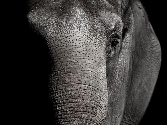 В Таиланде пять слонов пытались спасти тонущего сородича и погибли сами0