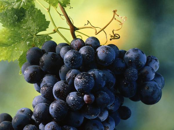 Медики рассказали о главной пользе винограда0
