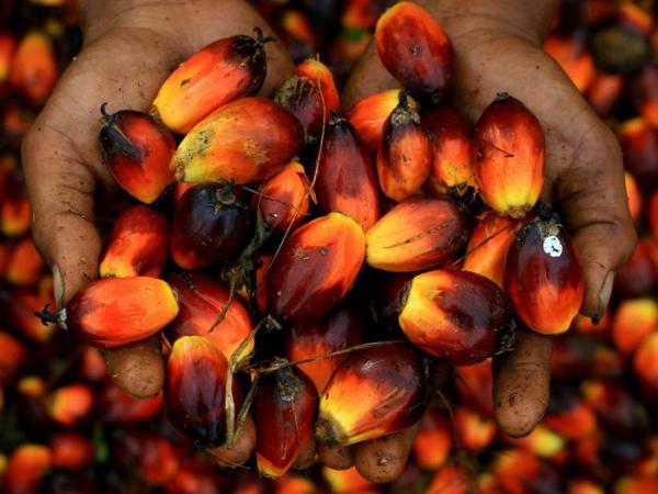 Пальмовое масло. Польза и вред4