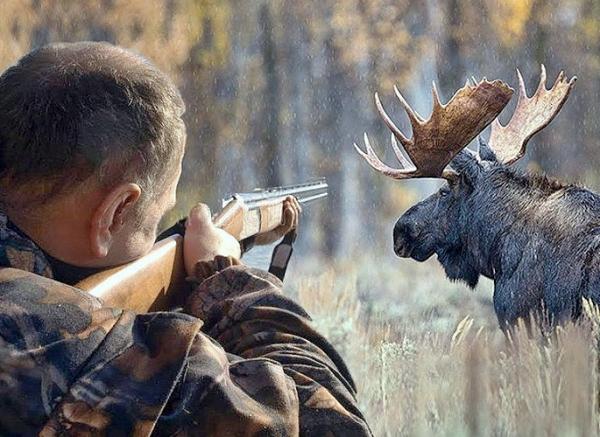 Photo of Госдума разрешила расстреливать животных в вольерах