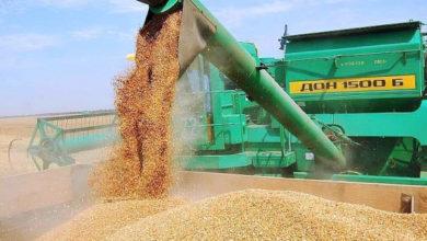 Photo of Российской пшеницы стало не хватать