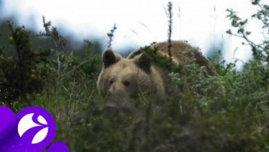 Photo of В ЯНАО медведь напугал путешественников