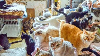 Photo of В Нижегородской области женщину держали взаперти с кошками почти 30 лет