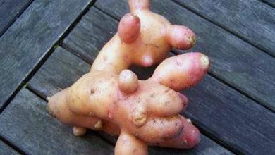 Photo of В Роскачестве предупредили о токсинах в овощах и фруктах