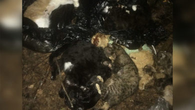 Photo of В России нашли мешки с десятками трупов искалеченных животных
